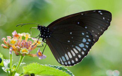 Angst voor vlinders